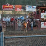 This horse really went wild out of the pen!